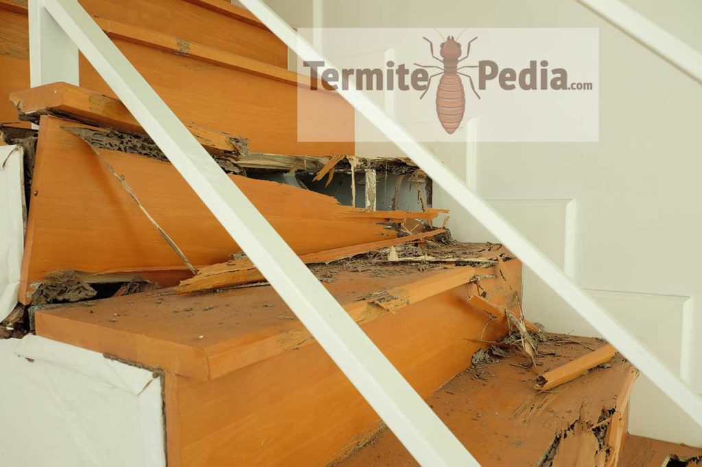 How to get rid of termites fast